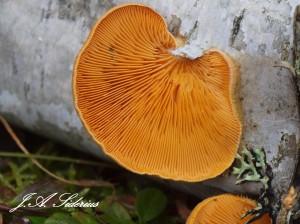 Orange Brackets